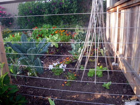 edible climbing plants edible landscape edible landscaping made easy with avis