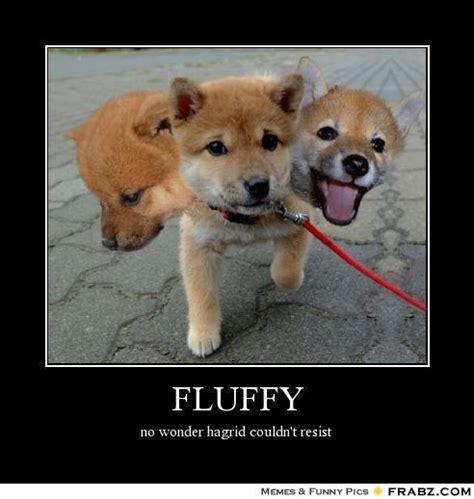 Meme Generator Dog - fluffy dog memes image memes at relatably com