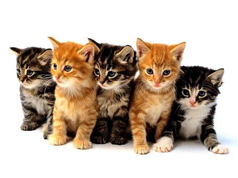 wallpaper chat lucu animalerie pour chats produits et accessoires pour les