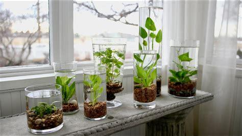 indoor water garden garden answer