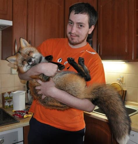 I googled pet fox and found this. I want one! : aww