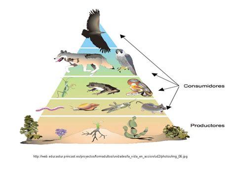 que son las piramides cadenas y redes troficas mi entorno un ecosistema viviente red trofica