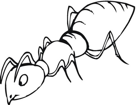 Outline Picture by Outline Picture Of Ant Clipart Best