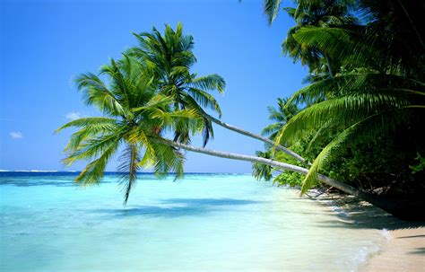manzara resimleri tropik manzara resimleri