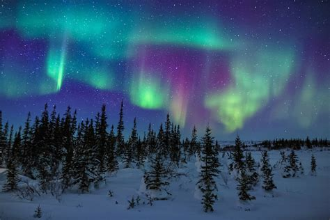 what color are the northern lights arctic nights and the colors of the northern lights