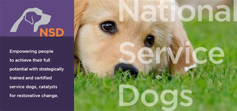 certified service certified service dogs for autism national service dogs