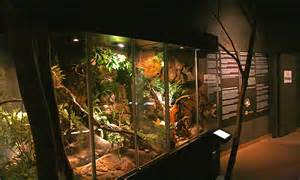 Tropical amphibian and reptile terrariums » Nordens Ark Gallery