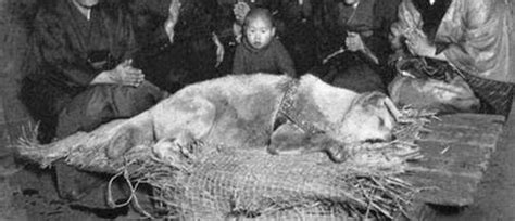 The Devotion and Loyalty of Hachiko Dog- Charismatic Planet Hachiko Movie