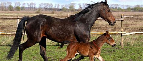 Sho Kuda Untuk Manusia express kirim kotoran hewan untuk orang mengesalkan