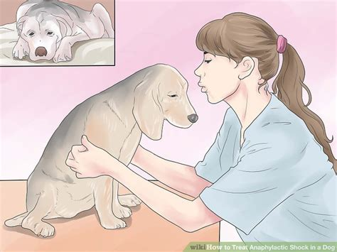 anaphylaxis in dogs how to treat anaphylactic shock in a 6 steps with pictures