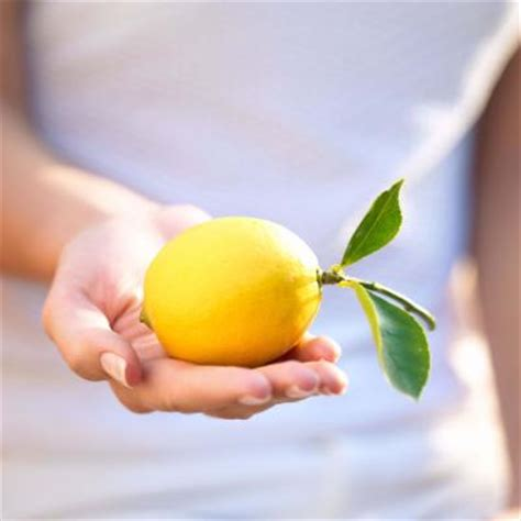 Cultivate Detox by How To Cultivate Meyer Lemon Trees Home Guides Sf Gate