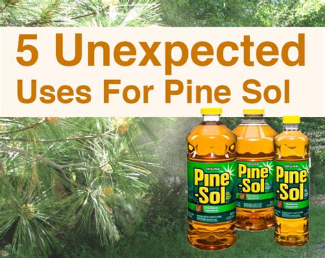 does pine sol kill bed bugs does pine sol kill bed bugs how to kill bed bugs with alcohol does alcohol kill bed