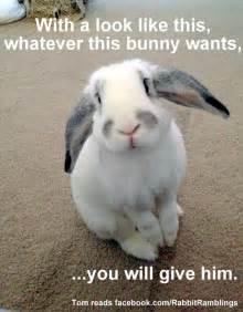 Rabbit Meme - rabbit ramblings funny bunny memes