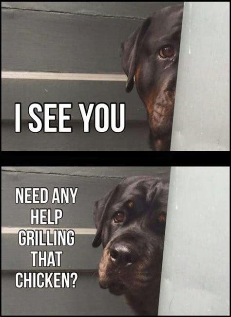 rottweiler memes 10 best rottweiler memes of all time