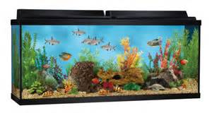 55 gallon aquarium starter kit review spec author tristan in 55 gallon