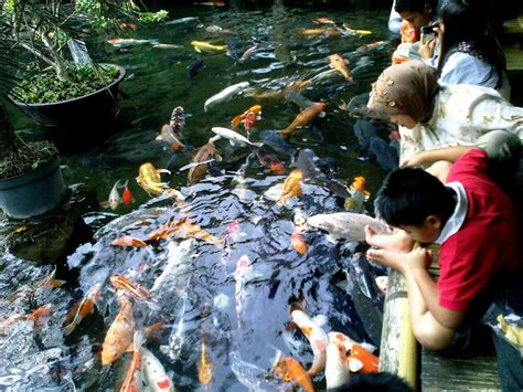 Pancing Di Malang 10 tempat kuliner terbaik di kota batu malang guidance