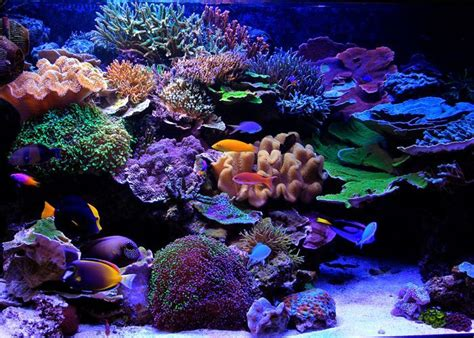 Reef Aquarium Aquascaping by Image Result For Reef Tank Aquascaping Reef Tank