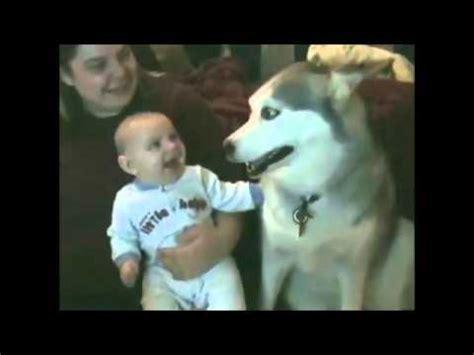 babies laughing at dogs babies laughing at dogs