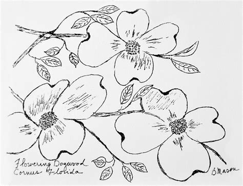 coloring pages of dogwood flowers flowering dogwood flower drawing www imgkid the