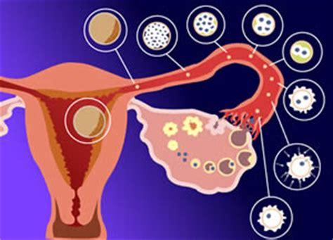 apparato genitale femminile interno apparato genitale femminile prof luigi chiappetta