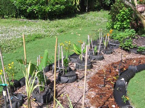 in florida a turf war blooms front yard vegetable