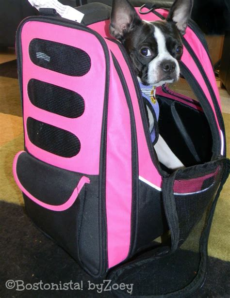 zoeys favorite pet carriers air travel  southwest