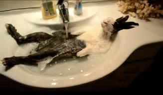 bunny takes a shower original
