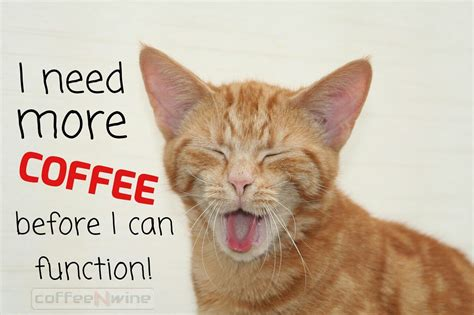 I Need Coffee i need more coffee before i can function what about you