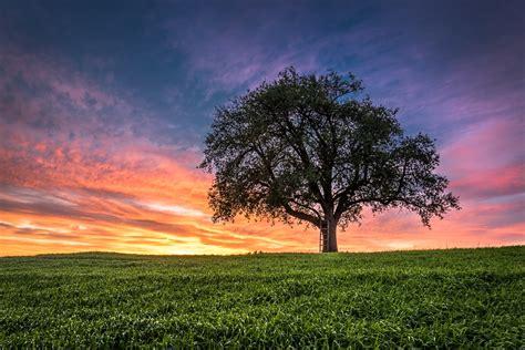 Sunset Field Tree Landscape Wallpaper 2048x1367 282390