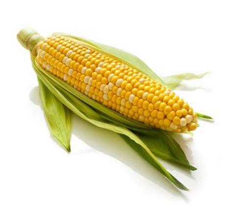 gambar jagung dan pohonnya gambar pemandangan