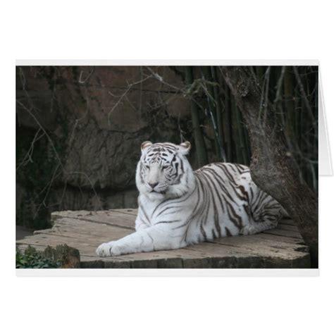 tiger card white tiger card zazzle