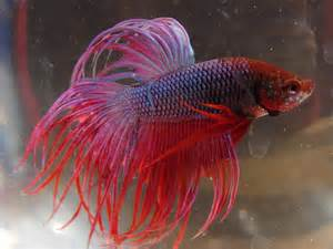 Pet Fish Types Of them is my peta fish,