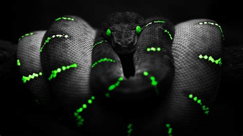 dark wallpaper hd 1366x768 snake of the dark wallpaper allwallpaper in 14667 pc en
