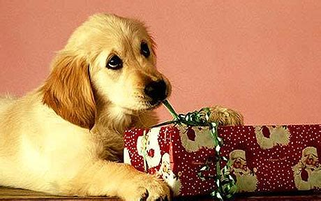 puppy present 25 exclusive presents ideas 2015 inspire leads