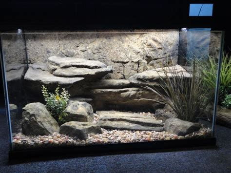 Pajangan Turtle turtle tank background here s a turtle aquarium with a cool background 2017 fish tank