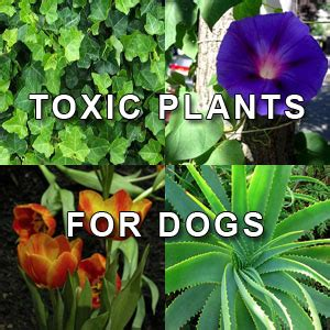 poisonous house plants for dogs house plants and pets popular house plans and design ideas