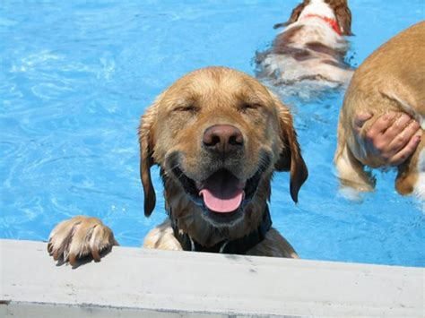 lucky puppy day care hosts epic pool pawty featured creature