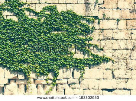 ivy and stone home on instagram ivy wall stock images royalty free images vectors
