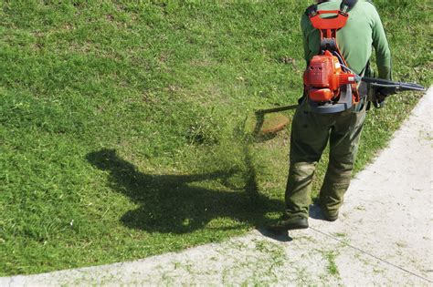 backyard cleaning services who s responsible the rental home lawn care debate