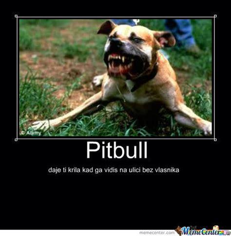 Pitbull Puppy Meme - meme center savijaca posts