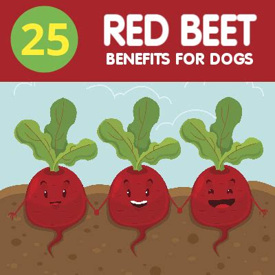 are beets for dogs daily beets for dogs olewo