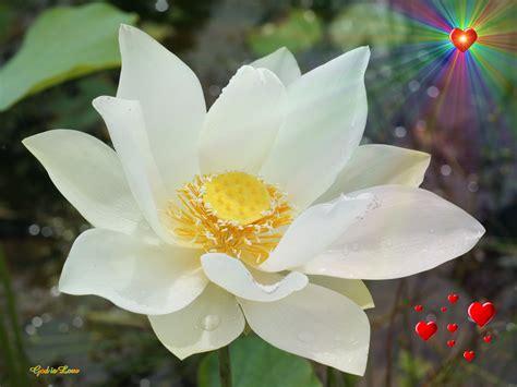 white lotus day spa point white lotus day