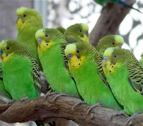 imagenes de pericos verdes cotorras coment 225 con buena onda taringa