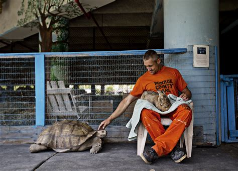 the rabbit how the culture of corrections encourages crime books at this florida the inmates are also zookeepers