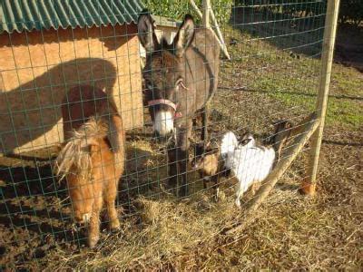 foto animali da cortile mangime pollaio