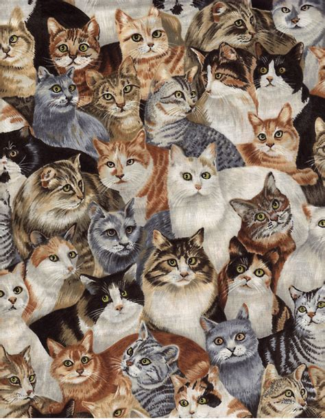 cat wallpaper collage cat collage tumblr cats wallpapers litle pups