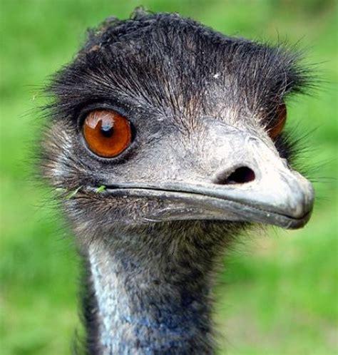 Indoor House Plant by 21st Of March 2014 Species Spotlight Emu Birdland