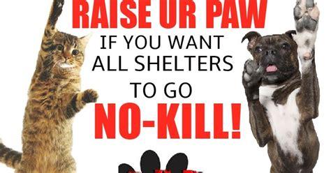 no kill shelters raise ur paw news go no kill adopting no kill policies within shelters