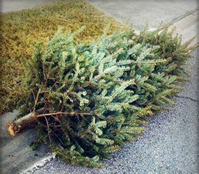 easy christmas tree recycling seattle maid services