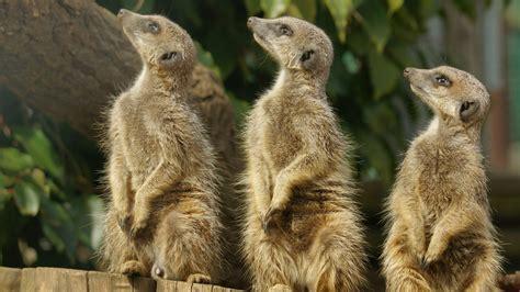 discount vouchers doncaster wildlife park paradise wildlife park discount voucher vouchers lets